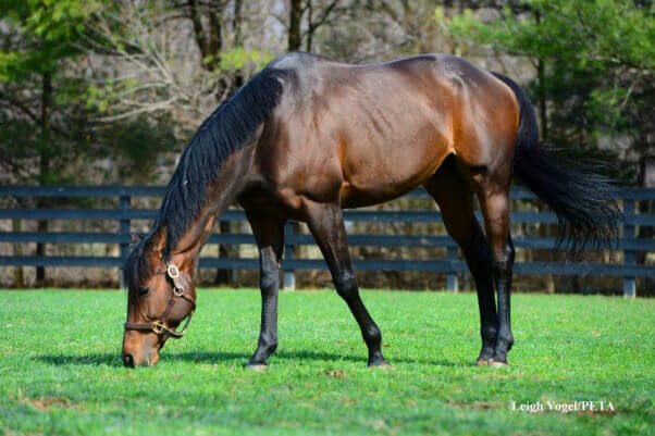 Valediction-the-Horse-Rescued-7-602x401