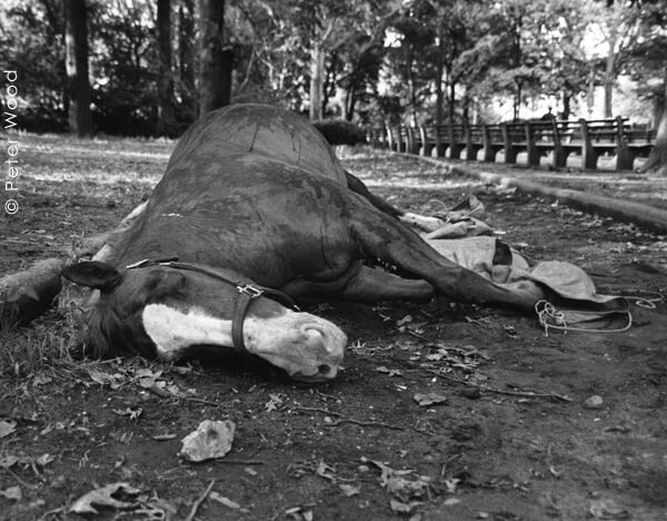 Dead-Carriage-Horse