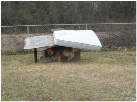 dogs suffering outdoors