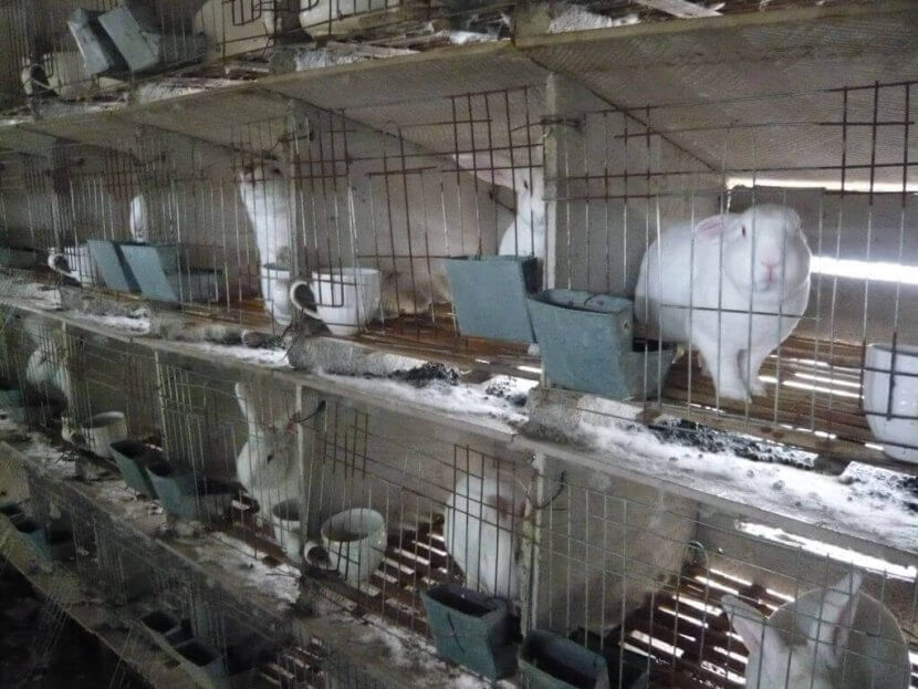 rabbits in stacked cages on chinese fur farm