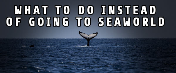 What to Do Instead of going to SeaWorld Thumb