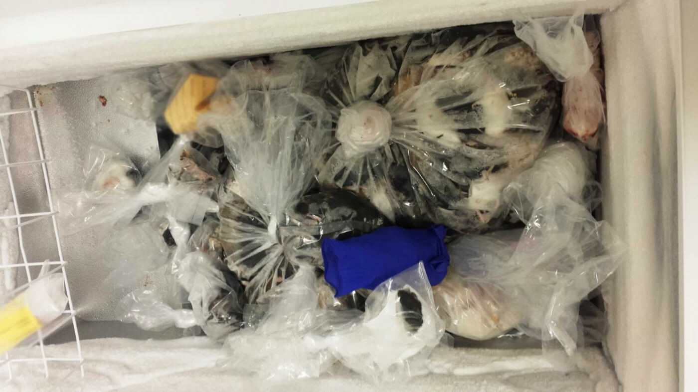 The whistleblower's photographs reveal a freezer filled with plastic bags stuffed with mice's bodies.