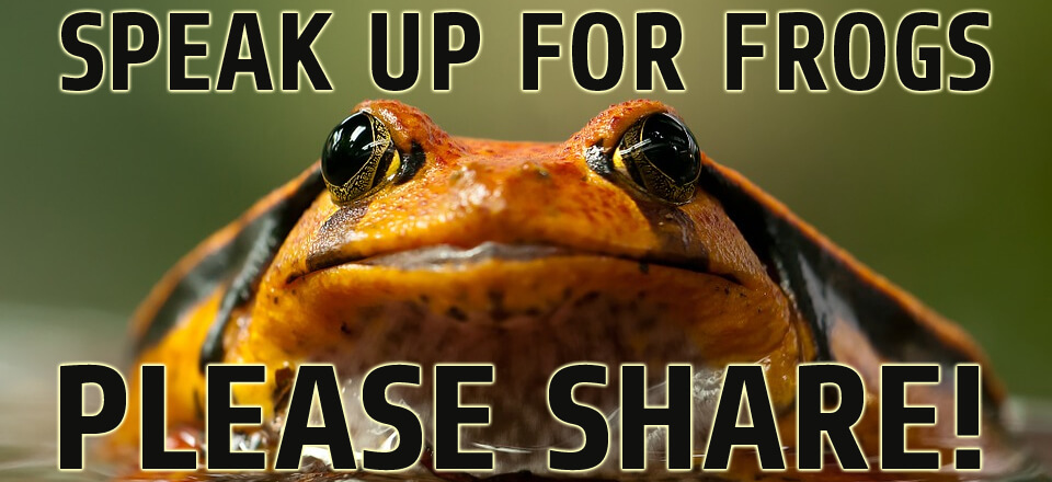 share for frogs