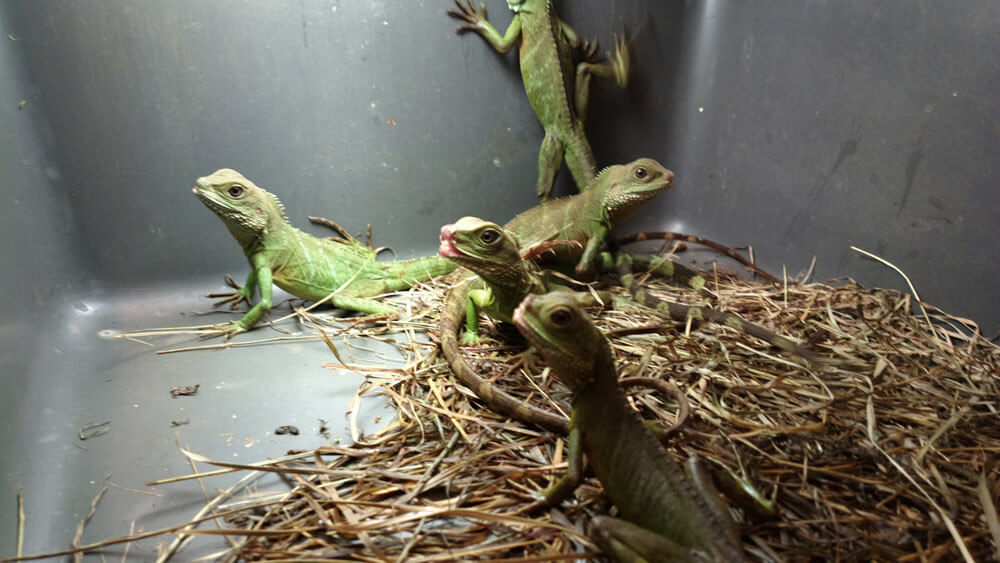 Why You Should Never Buy a Reptile From a Pet Store | peta2