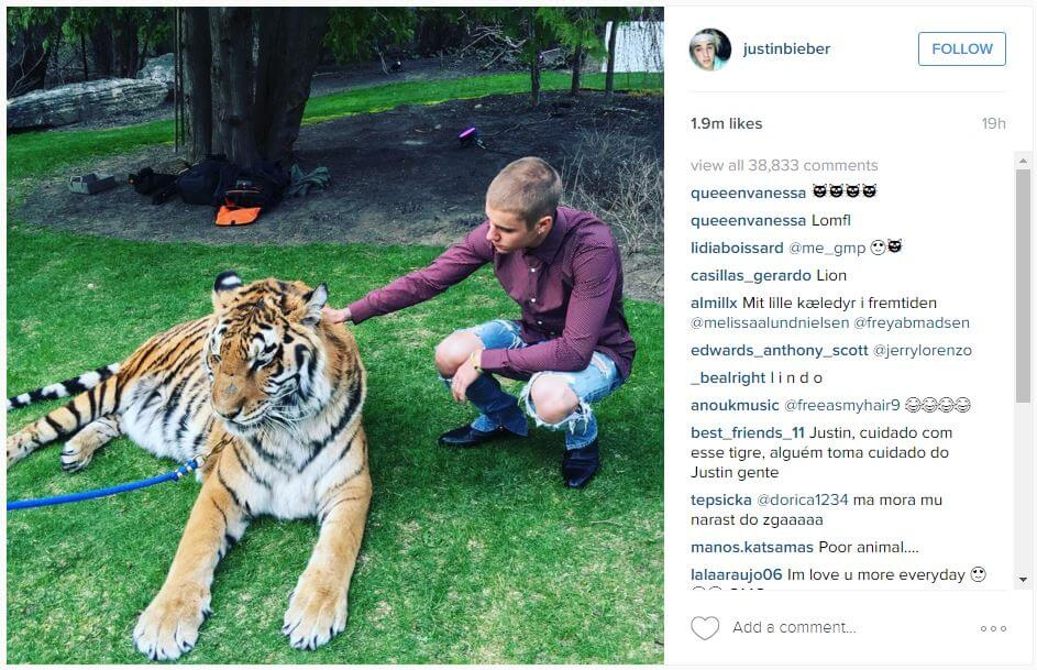 bieber with tiger