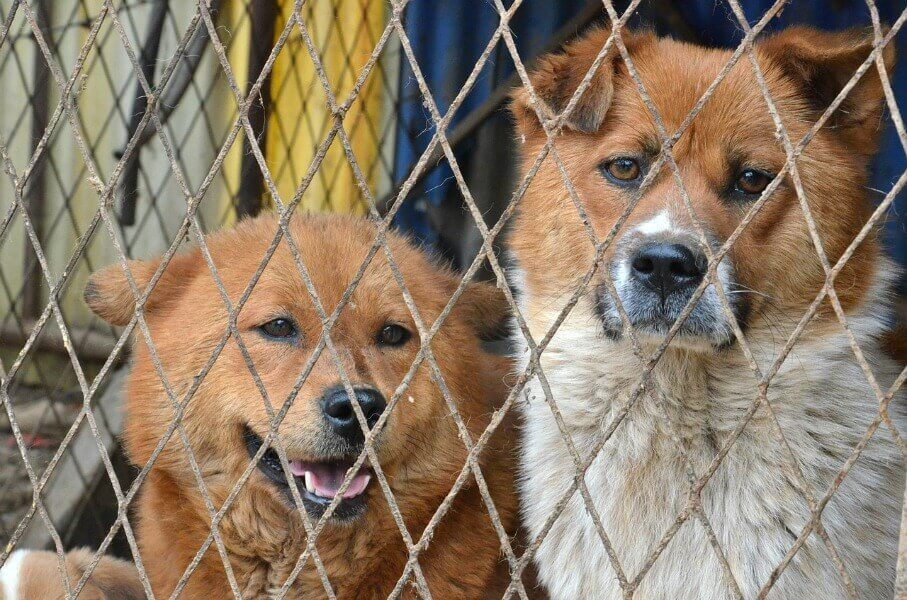 Dogs-Behind-Fence