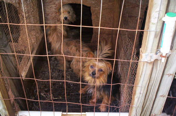 Dogs-in-puppy-mill