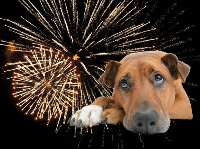 How to Calm Your Animals During Firework Season