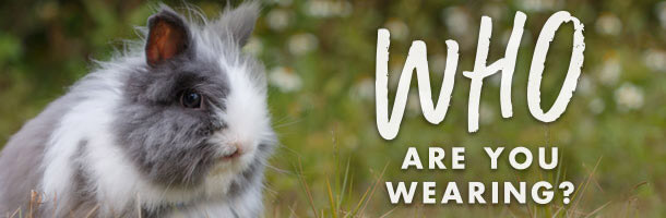 Who Are You Wearing banner: angora rabbit
