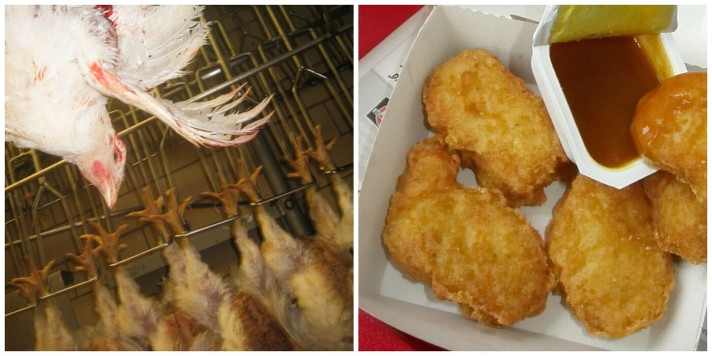 how chicken nuggets are made peta2