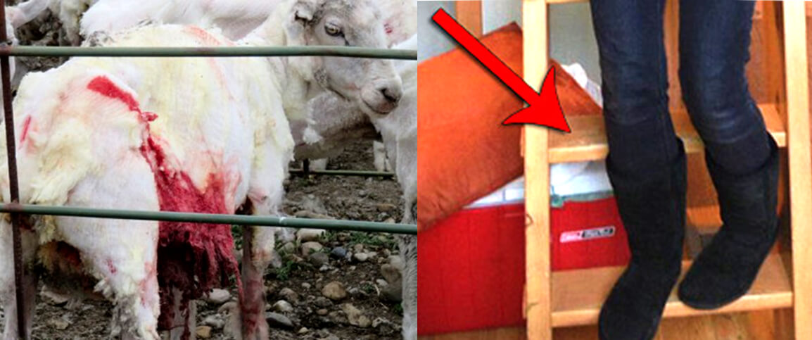 905d0938fd6 What I Learned About UGGs | peta2