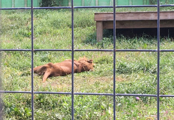 At Tri-State Zoological Park, a roadside zoo in Cumberland, Maryland, your nightmare is the animals' reality.