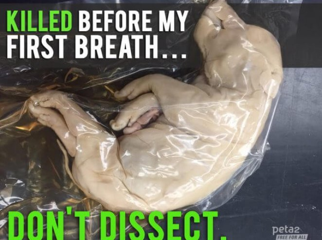 Creepy Things That Have Taken Place at Dissection Suppliers
