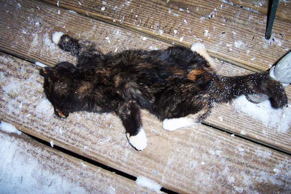 Image result for frozen cat