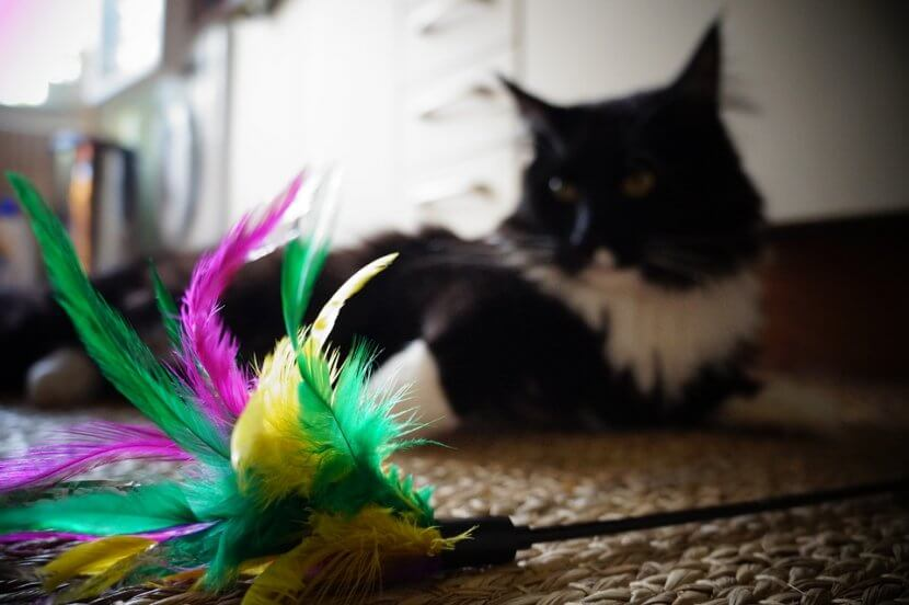 why you should never buy feather cat toys, feather alternatives