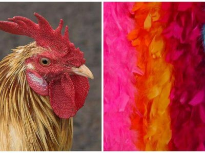 Why You Should Never Buy ANY Feathers