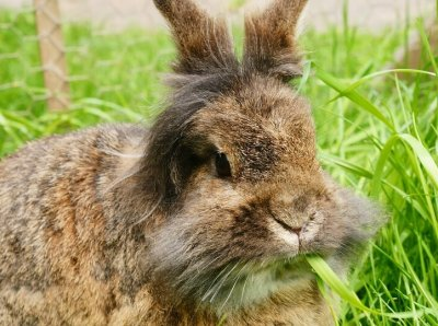 Victory: BCBG Has Just Banned Fur and Angora