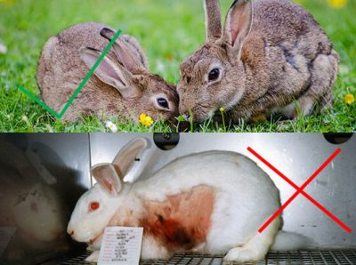 10 Things You're Doing All Wrong if You Care About Animals