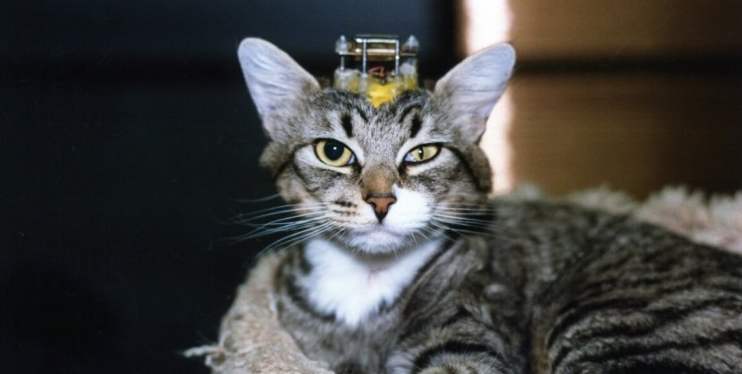 These 11 Terrifying Experiments on Cats Are a Living
