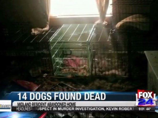 Dogs Abandoned by Animal 'Rescuer' Die From Starvation