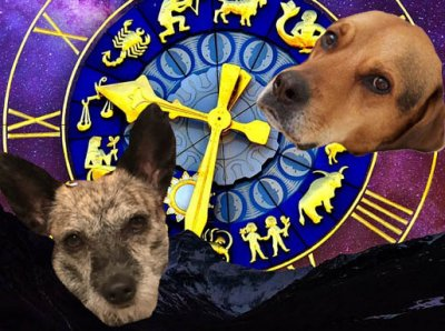 Your Complete Horoscope for Helping Animals