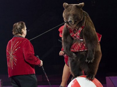 6 Heartbreaking Reasons Why Bears Shouldn't Be in Circuses
