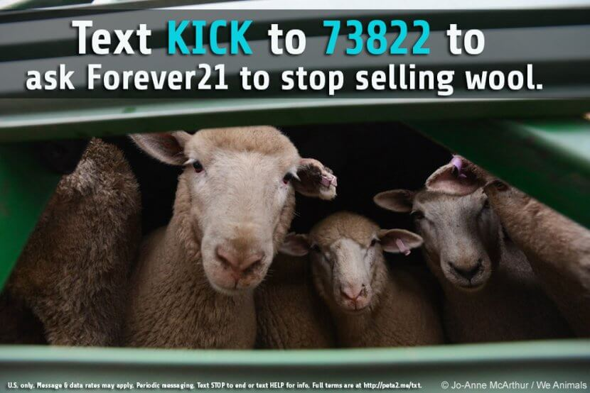 wool cruelty forever 21