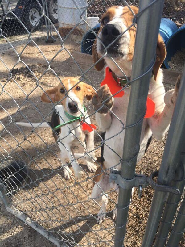 backyard dogs, outdoor dogs, how to help chained dogs