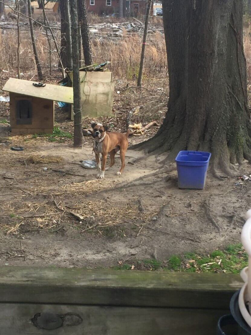 chained dog, outdoor dog, helping outdoor dogs