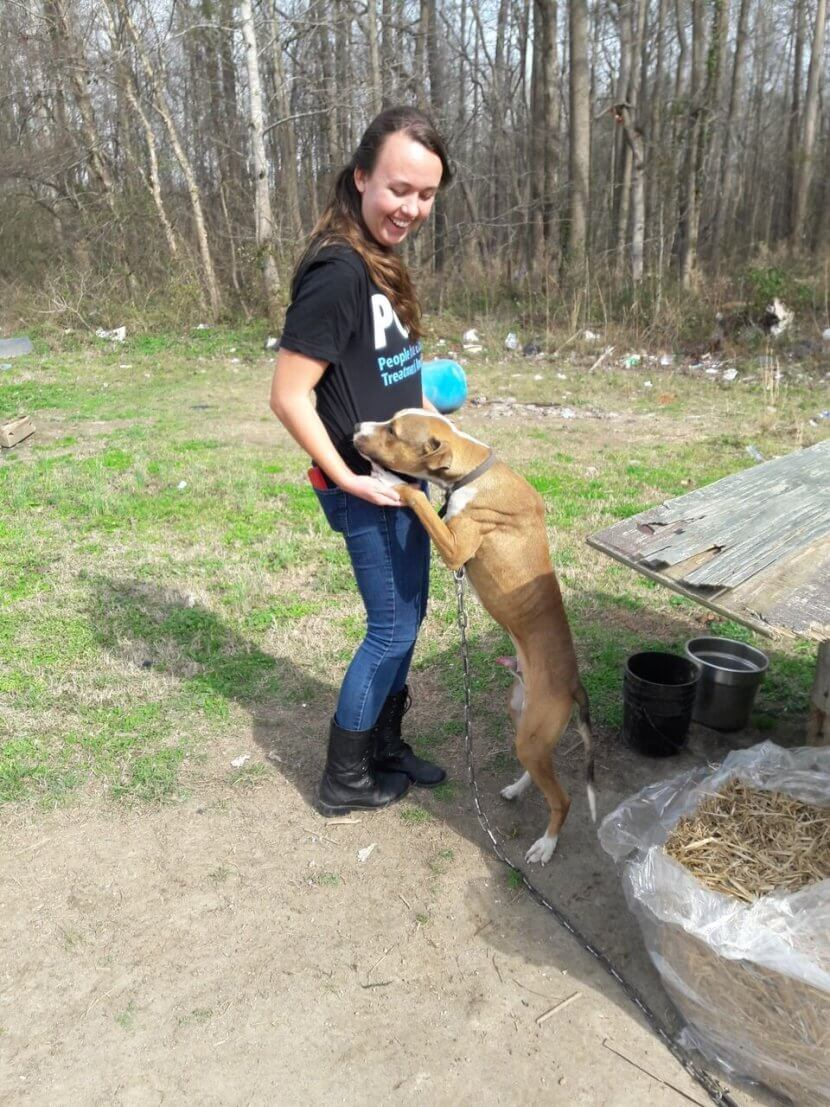 field workers, CAP straw derlivery, helping chained dogs, outdoor dogs