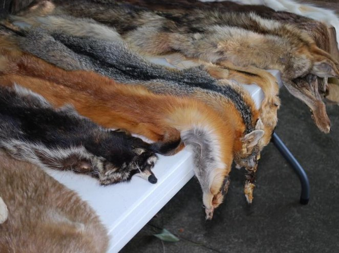VICTORY: Yet Another Fashion Designer Is Ditching Fur