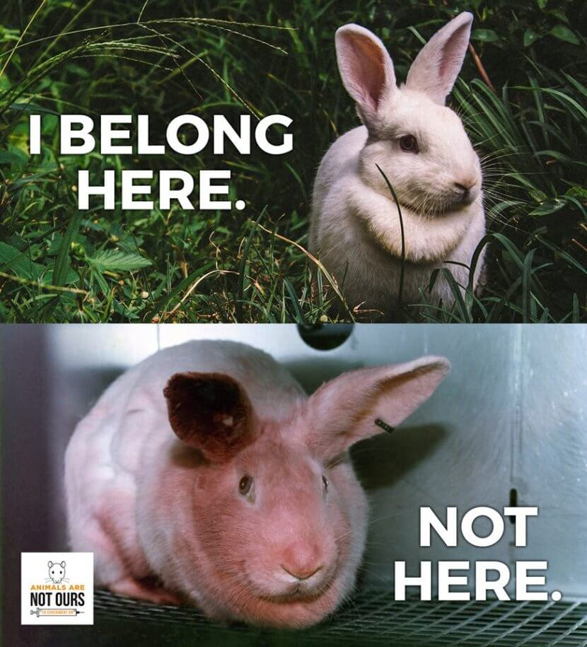 The cruelty-free status of this long-time beauty brand remains confusing for many.