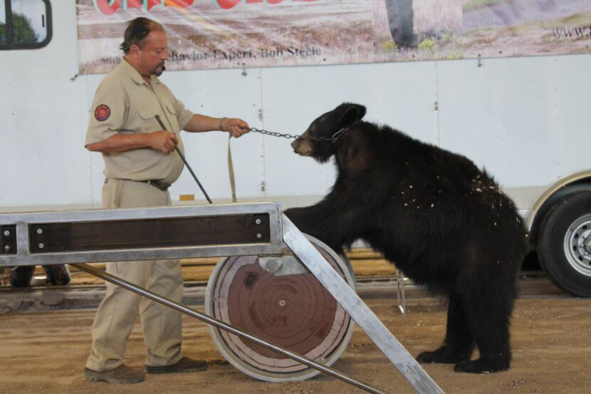 the great bear show cruelty