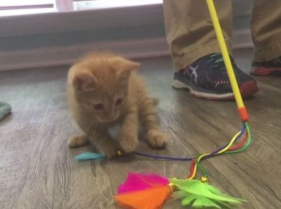 Teens Face Felony Charges for Trying to Drown a Kitten on Snapchat